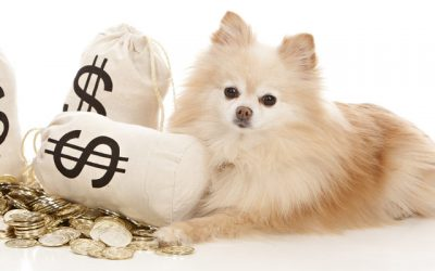 The True Cost of Owning a Dog (Yearly Price Breakdown)